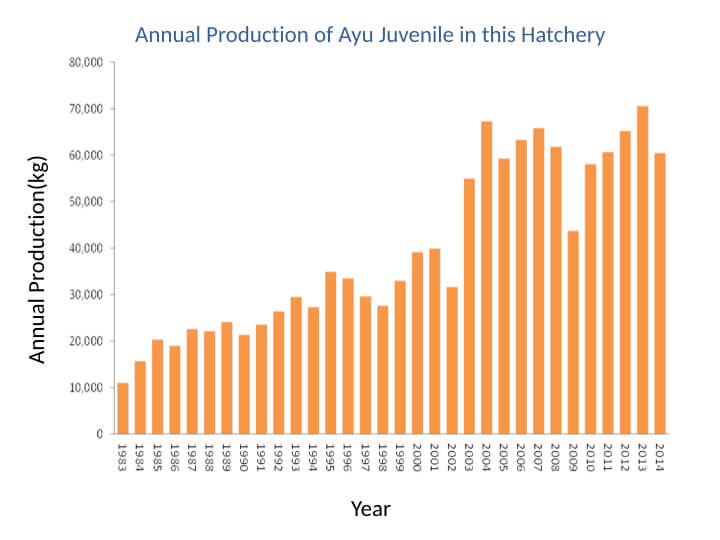Annual Production of Ayu Juvenile in this Hatchery